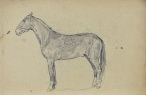 Ludwik MACIĄG (1920-2007), Szkic konia w ujęciu z lewego boku