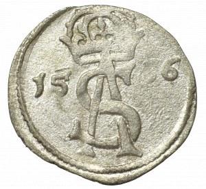 Sigismund II Augustus, 2 denarii 1566, Vilnius