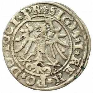 Zygmunt I Stary, Grosz 1534, Elbląg