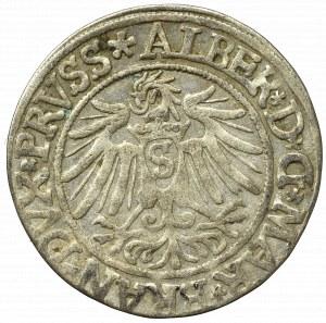 Prusy Książęce, Albrecht Hohenzollern, Grosz 1537, Królewiec