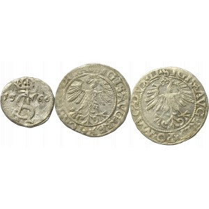 Sigismund II Augustus, Lot of halfgroats and 2 denarii