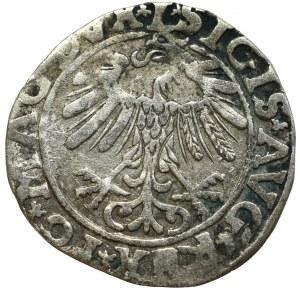 Zygmunt II August, Półgrosz 1557, Wilno - L/LITVA