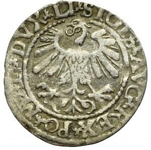Zygmunt II August, Półgrosz 1559, Wilno - LI/LITVA