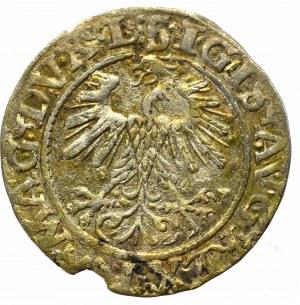 Sigismund II Augustus, Halfgroat 1560, Vilnius - LI/LITVA