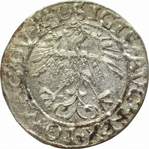Zygmunt II August, Półgrosz 1562, Wilno - L/LITV
