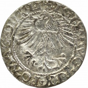 Zygmunt II August, Półgrosz 1562, Wilno - LI/LITV