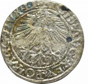Zygmunt II August, Półgrosz 1562, Wilno - LI/LITVA