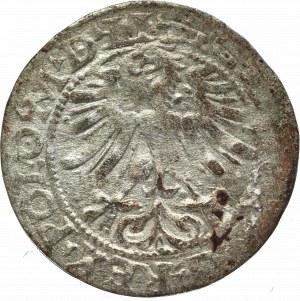 Zygmunt II August, Półgrosz 1565, Wilno - LI/LITVA