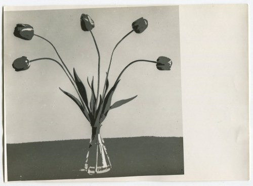 """fot. artystyczna 02. ROMER Witold - Tulipany (""""Szkarłatne tulipany"""") [1950]"""