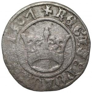 Zygmunt I Stary (1506-1548) - Półgrosz Kraków 1507