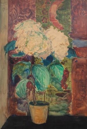 Leon Wyczółkowski (1852 Huta Miastkowska k. Garwolina - 1936 Warszawa), Biała hortensja