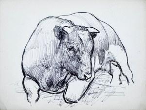 Ludwik MACIĄG (1920-2007), Szkic leżącego byka