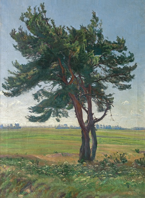 Lasocki Kazimierz, SAMOTNA SOSNA, 1927