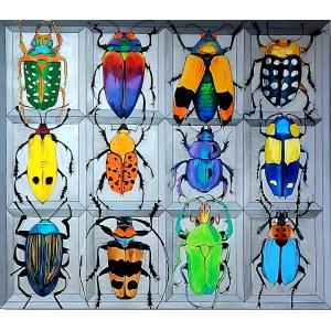 Sylwia Wenska, Entomofobia-Dwanaście żuków, 2020