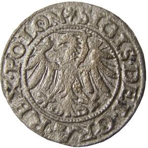 Zygmunt I Stary, szeląg 1546 POLON, Gdańsk