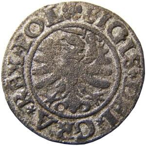 Zygmunt I Stary, szeląg 1531 POL, Gdańsk