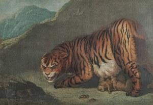 Lwy, Tygrysy - para grafik