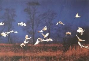 Janusz WOJCIESZAK (ur. 1950), The white herons, 2009/2020