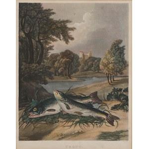 Sigismund Himely (1801 - 1872), wg Stephen Elmer (1717 - 1796), Pstrągi, Paryż, ok. 1850 r.
