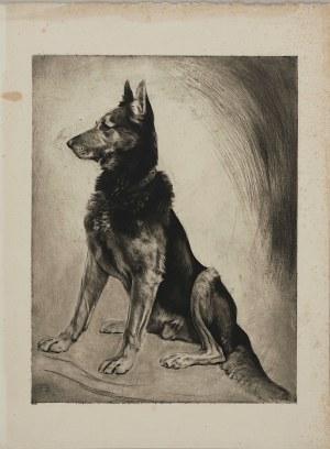 Autor nierozpoznany, Owczarek niemiecki, lata 1920-1930
