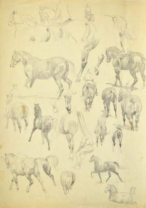 Ludwik MACIĄG (1920-2007), Szkice konia i jeźdźca na koniu – w wielu ujęciach