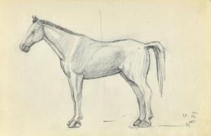 Stanisław ŻURAWSKI (1889-1976), Szkic konia z lewego boku, 1921