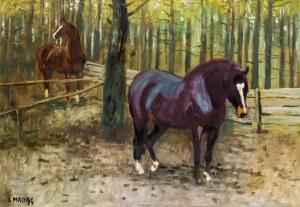 Ludwik Maciąg, Konie