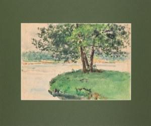 Tadeusz CIEŚLEWSKI (1870-1956), Drzewo w Łazienkach Królewskich w Warszawie, lata 40-te XX w.