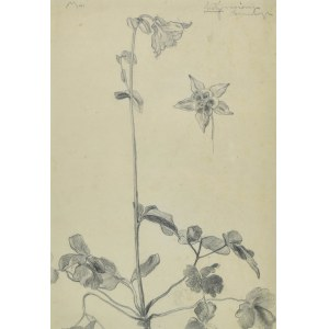 Stanisław KAMOCKI (1875-1944), Studia kwiatów, ok. 1900
