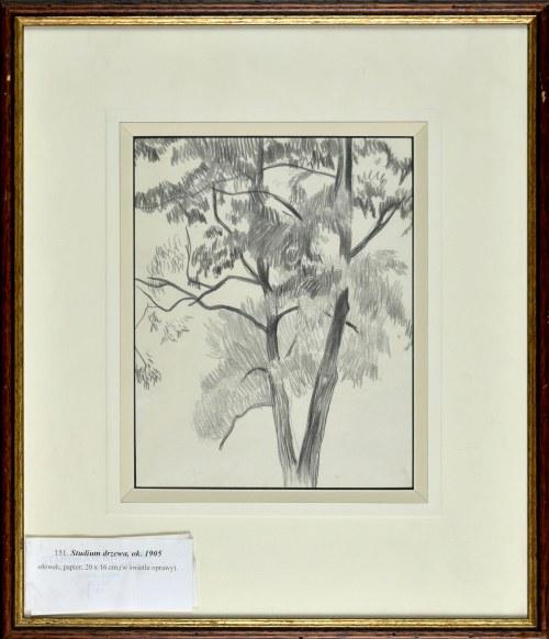 Stanisław KAMOCKI (1875-1944), Studium drzewa, ok. 1905