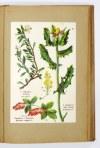 VERDMON - Kuracja roślinna. 1050 wypróbowanych rad i wskazówek jak leczyć... 1936