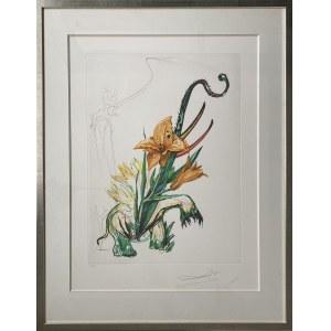 Salvador Dali (1904-1989), Hemerociallis Thumbergii Elephanter Furiosa z cyklu Surrealistyczne kwiaty