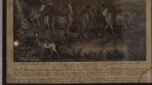 miedzioryt Martin Elias Ridinger (1731 Augsburg 1780)