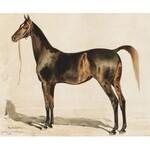 Juliusz Holzmüller (1876 Bolechów – 1932 Lwów), Portret konia angielskiego - Hindostanka, 1906 r.