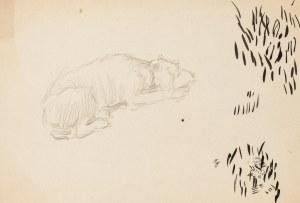 Józef Mehoffer (1869 Ropczyce - 1946 Wadowice), Szkic śpiącego psa
