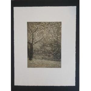 AN,Ogród jabłkowy,1982