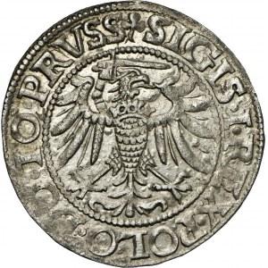 grosz, 1539, Elbląg