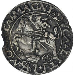 RR,- Zygmunt II August, Grosz 1566, Tykocin z herbem Jastrzębiec