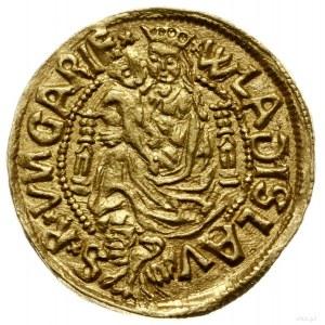 goldgulden bez daty (1501), Nagybanya, mincerz Kakonyi ...