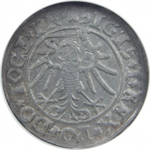 Zygmunt I Stary, Grosz 1534, Elbląg, NGC MS62