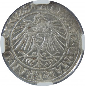 Albert Hohenzollern, Grosz 1538, Królewiec, NGC MS63