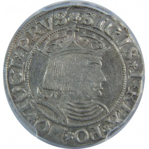 Zygmunt I Stary, Grosz 1531, Toruń, PCGS AU58