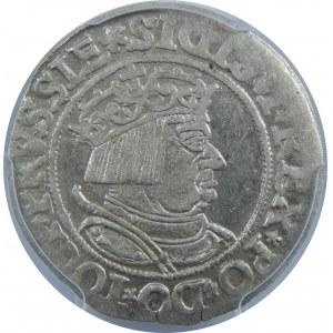 Zygmunt I Stary, Grosz 1534, Toruń, PCGS MS61