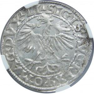 Zygmunt II August, Półgrosz 1553, Wilno, NGC MS62