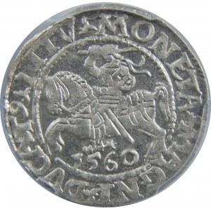 Zygmunt II August, Półgrosz 1560, Wilno, PCGS MS63