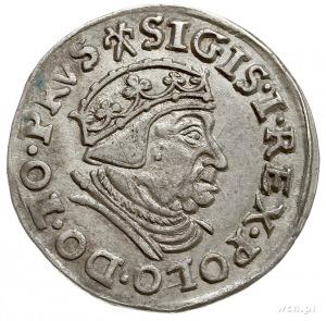 trojak 1539, Gdańsk, korona królewska bez krzyża, Iger ...