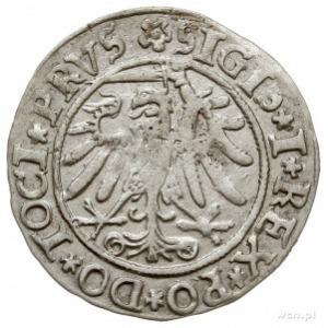 grosz 1534, Elbląg, nieco rzadszy wariant napisów PRVS ...