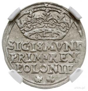 grosz 1546, Kraków, napis w trzech wierszach i u dołu d...