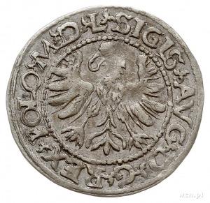 półgrosz 1566, Tykocin, odmiana z małym herbem Jastrzęb...