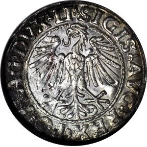 Zygmunt II August, Półgrosz 1548, Wilno, rzymska I, menniczy